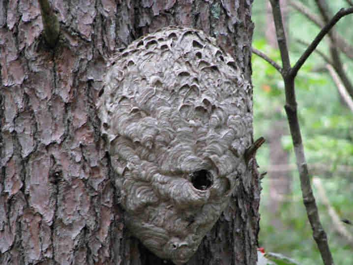 Stan's Nest